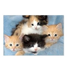 shelter-kittensDSC05383a Postcards (Package of 8)