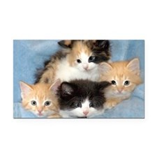 shelter-kittens12x20 Rectangle Car Magnet