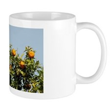 Croatian countryside. Orange tree with  Mug