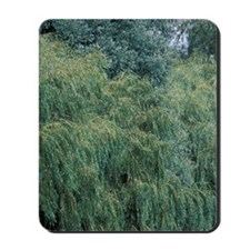Europe, England, Cambridgeshire, Ely. Ba Mousepad