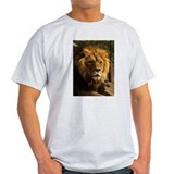 Male Lion Face Ash Grey T-Shirt