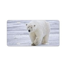 800px-Polar_Bear_-_Alaska4 Aluminum License Plate