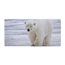 800px-Polar_Bear_-_Alaska4 Beach Towel