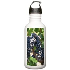 DHPurpGrapes1_7X5 Water Bottle