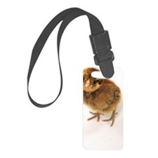 Little Bitty 10 Luggage Tag