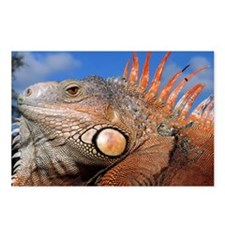 Iguana laptop Postcards (Package of 8)