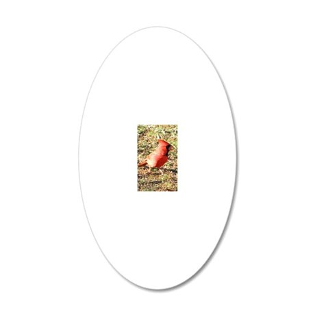 Cardinal small poster 20x12 Oval Wall Decal