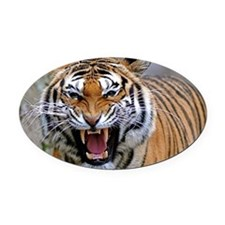 Atiger laptop Oval Car Magnet