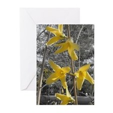 Floral Greeting Cards: Forsythia (Pk of 10)