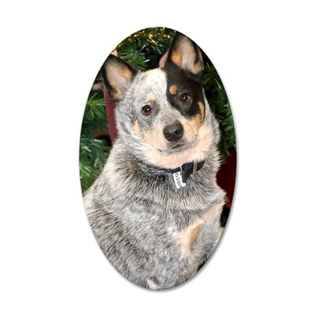 cattle-dog-photo 35x21 Oval Wall Decal