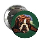 Brindle English Bulldog Button