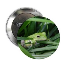 "notecard tree frog 2.25"" Button"