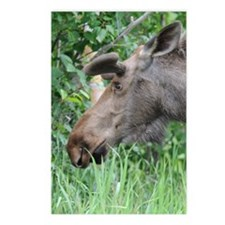 5x8_journal_moose_1 Postcards (Package of 8)