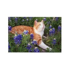 Cat In Bluebonnets Rectangle Magnet