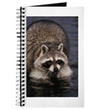 Racoon in Water Journal