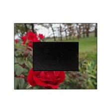 Red Roses in Park Picture Frame