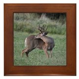 8 point Buck Framed Tile