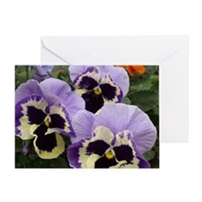 Multi colored Pansies Greeting Card
