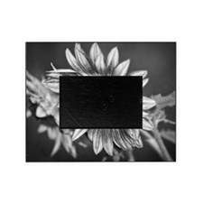Black and White Sunflower Picture Frame