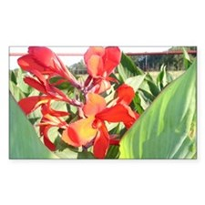 Canna Lily Sun Bath Decal