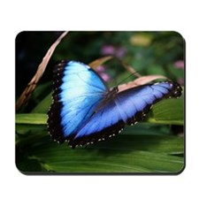 Blue Morpho Butterfly 2 Mousepad