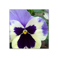 "Lavender and Purple Pansy F Square Sticker 3"" x 3"""