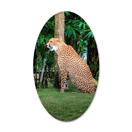 Tampa Cat 35x21 Oval Wall Decal