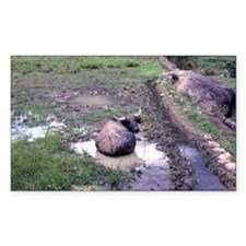Water buffalo sitting Decal