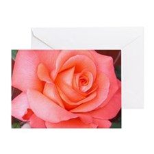 AFP 015a Rose coral clsup Greeting Card