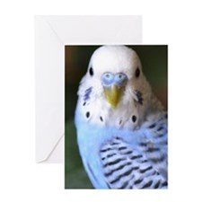 Budgies 013 Greeting Card