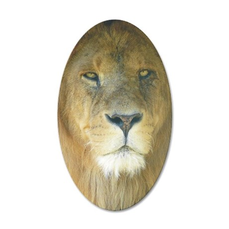 Lion iphnew 35x21 Oval Wall Decal