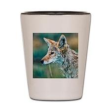 coyote Shot Glass