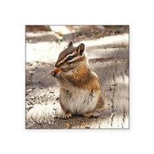 "Chipmunk Square Sticker 3"" x 3"""