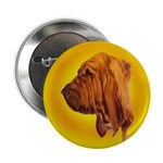 Beautiful Bloodhound Head stu 2.25