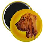 Beautiful Bloodhound Head stu Magnet