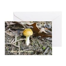 Amanita-flavoconia Greeting Card