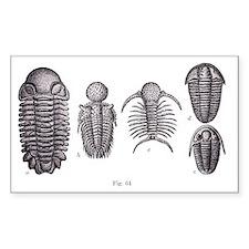 Trilobites Decal