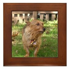 Australian Terrier Framed Tile