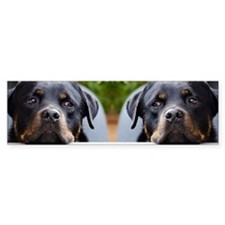 Rottweiler dog Bumper Sticker