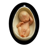 """Ansel"" Egg Baby - Oval Ornament"