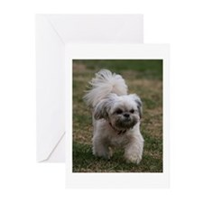 Here I come Greeting Cards (Pk of 10)