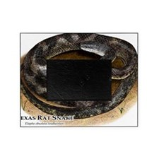 Texas Rat Snake Picture Frame