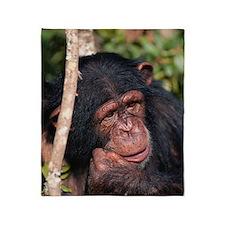 Chimpanzee (Pan troglodytes), close  Throw Blanket