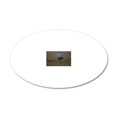Secretary bird (Sagittarius  20x12 Oval Wall Decal