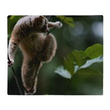 Slow loris (Nycticebus coucang) on t Throw Blanket