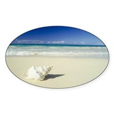 Shell lying on beach Decal