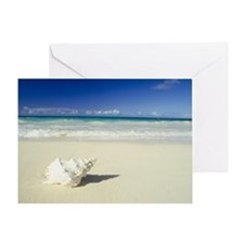 Shell lying on beach Greeting Card