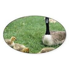 Canadian goose with goslings, Minne Decal