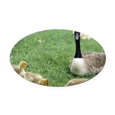 Canadian goose with goslings, Minn Oval Car Magnet