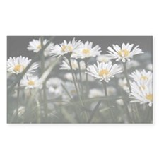 Daisies in field Decal
